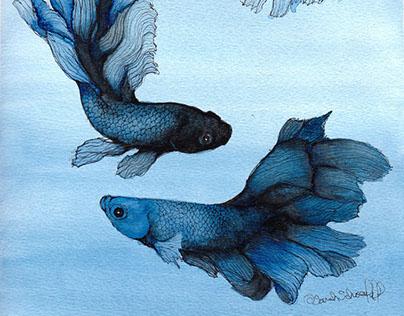 Betta Fish in Prussian Blue and Black