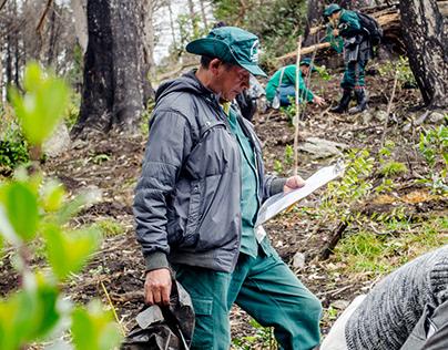 'Plantatón' en los Cerros Orientales / Revista Semana