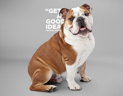 DOG it // Walt Disney