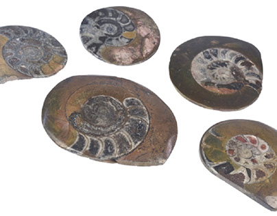 Featured collectible: Ammonite fossils