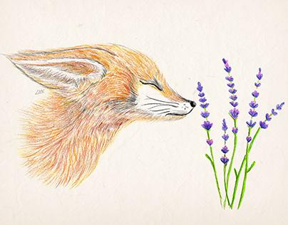 foxy ♥