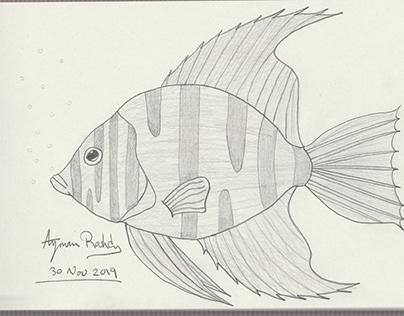 My hand drawn images - Fish