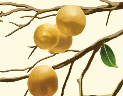 Agrumi/Citrus