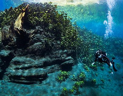 Buceando en un bosque encantado subacuático.