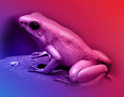 Golden Frog Poster Design