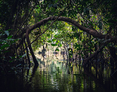 Pacaya Samiria - the amazonian jungle