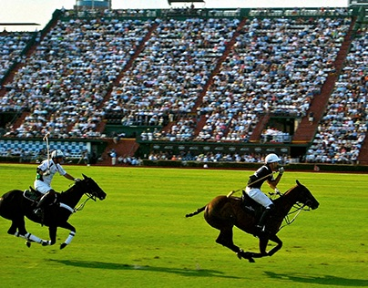 Polo: An Insight - Coffee Table Book for Amity Polo Cup