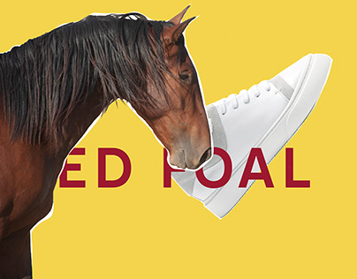 Horses and Sneakers