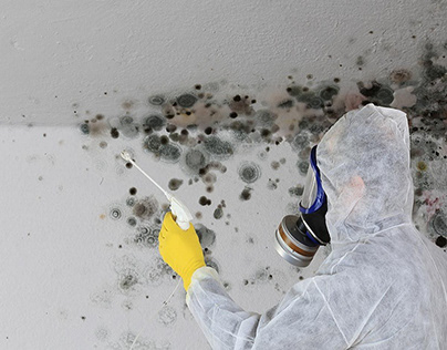Mold Removal Near Me
