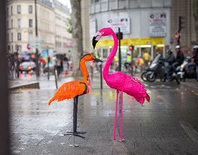 Tropical birds in Paris