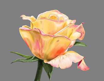 Illustration - Flowers