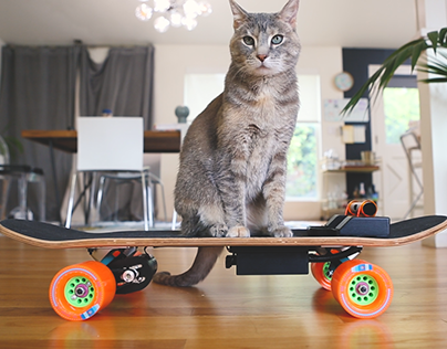 Electric Skateboard for Cats
