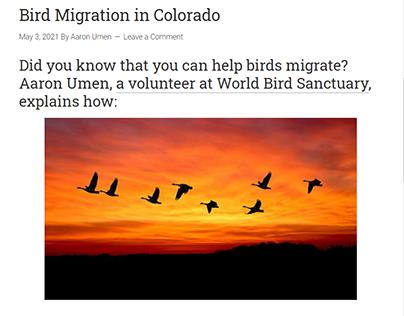 Bird Migration in Colorado
