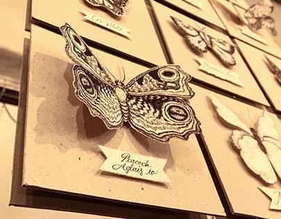Butterflies study