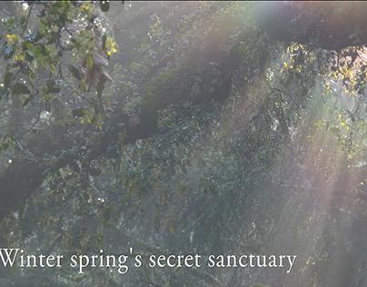 Redwood Rain visual poetry