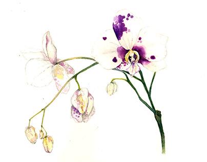 Botanical Watercolor Illustrations