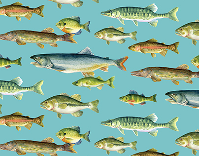 Fishing Pattern Collection