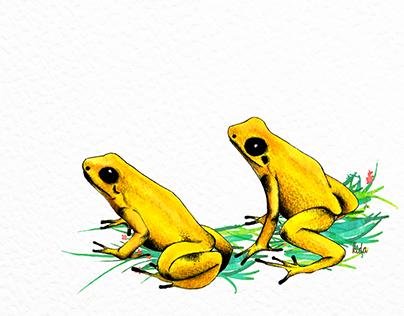 Fauna colombiana- Rana dorada o dardo.