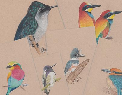 Birds! I like birds...