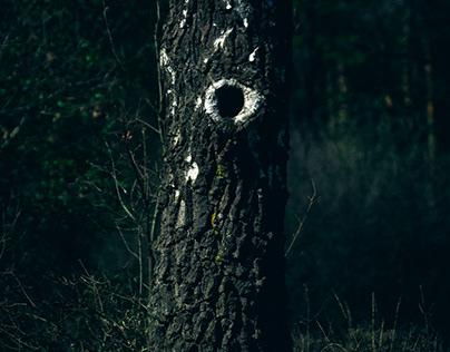 Birch O