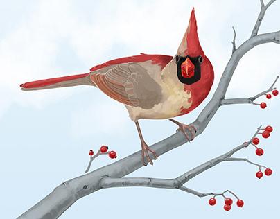 Gynandromorphic Cardinal