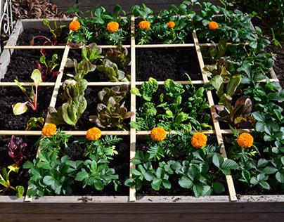 How do You Make a Square Foot Garden? - Plantgrowpick