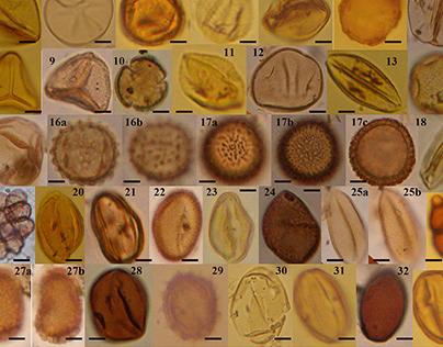 Pollen Taxonomic Identification