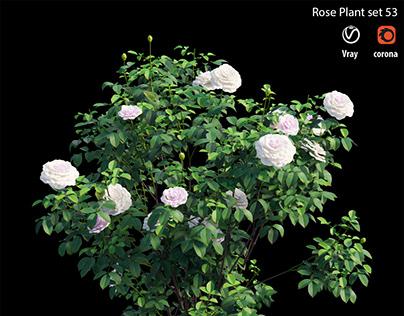 Rose plant set 53
