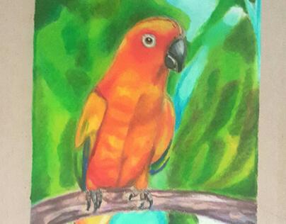 sun conure bird made with colorpencils
