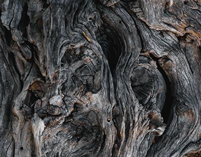 ●●● वृक्ष ●●●
