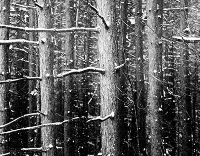 Un hiver sans hiver II