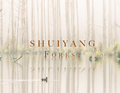 Shuiyang Forest, Taiwan // August 2020
