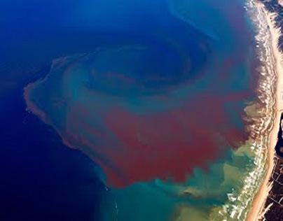 The Dangers Of Red Tide