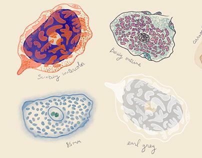 Cells Sketch