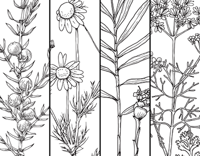 Castle & Key Botanical Illustrations