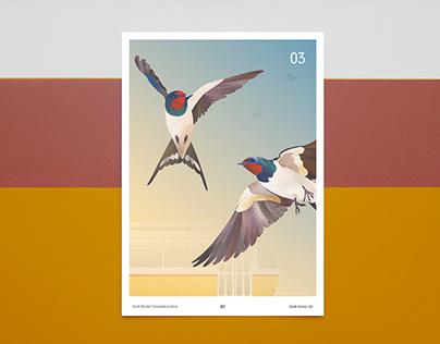 Birds of Budapest