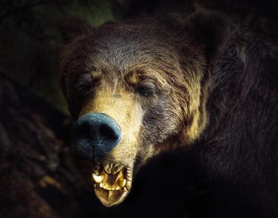 Großer Bär