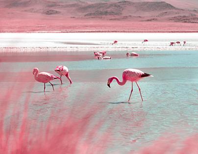 Bolivia - Infraland