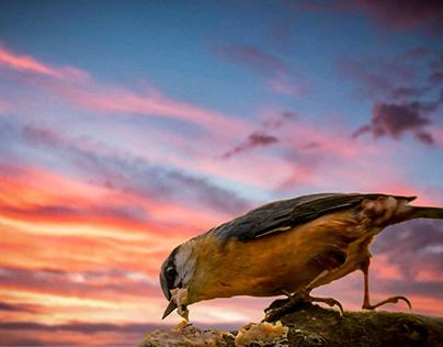 Birds, sunset