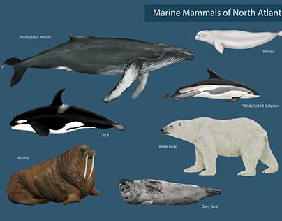Marine mammals of North Atlantic