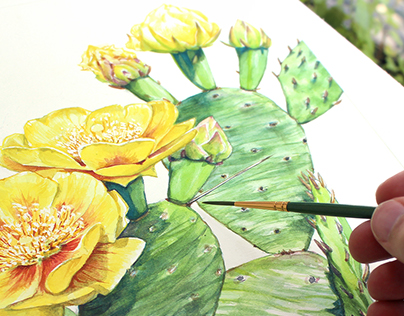 Eastern Prickly Pear - Opuntia humifusa in Watercolor
