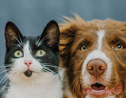 Flayer Pet Shop