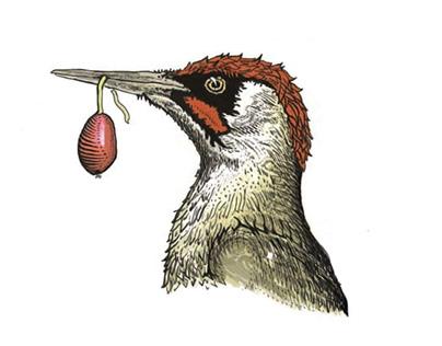 Driokolaptis sticker II