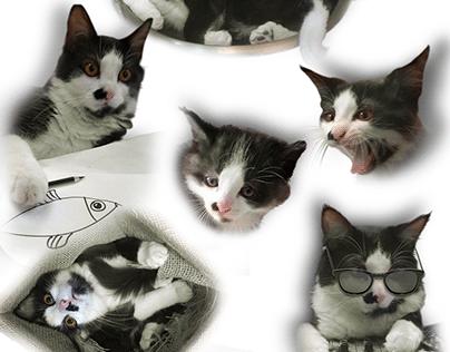 Juca The Cat