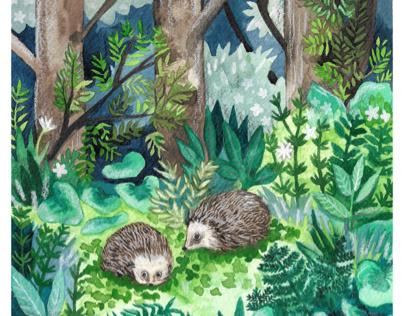Hedgehog Awareness