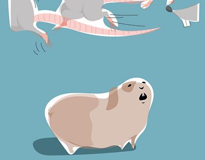 świnki morskie