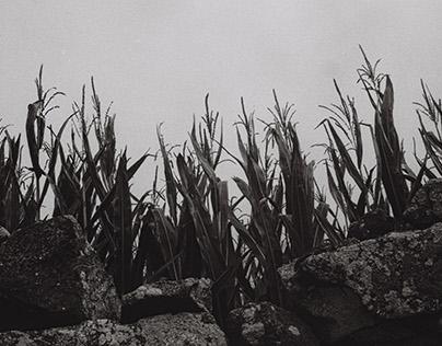 Analog Black and White