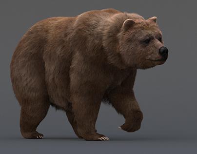Bear model.