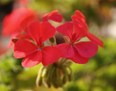 Imaging a floral artist