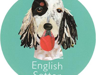 010 | English Setter